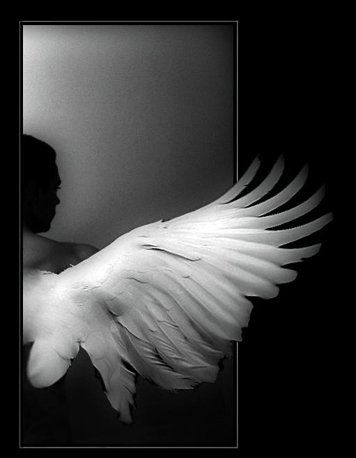 ala-de-angel