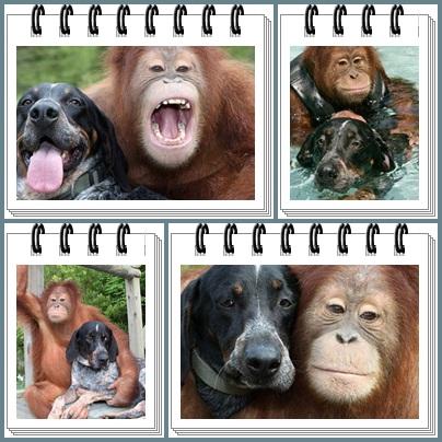 collage-orangutan-y-perro