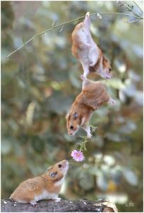 el-amor-entre-animales