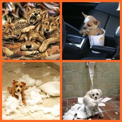 humor-perros