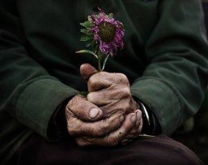 manos-viejo-flor