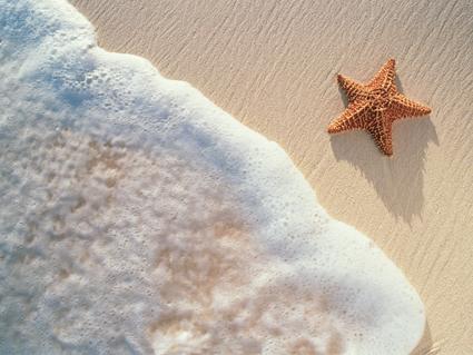 estrella-de-mar11
