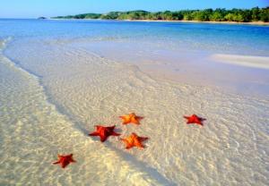 jardines-del-rey-en-cuba-estrellas-de-mar