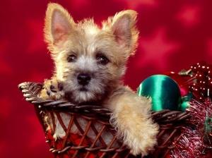 fondo-pantala-perro-navidad-source_wdp