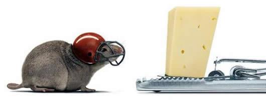 raton-precavido