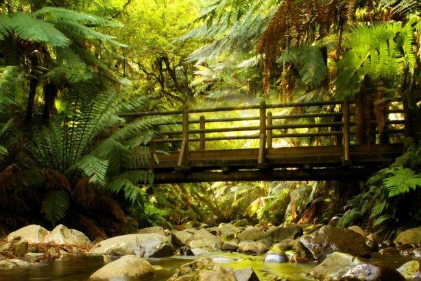 forest_bridge_stock_1_by_blaisedrew62-d37xafj